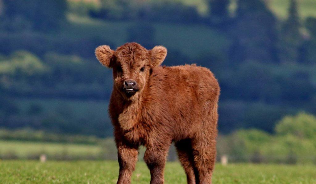 Aus Liebe zu den Tieren ist der häufigste Grund warum sich die Menschen für vegan entscheiden