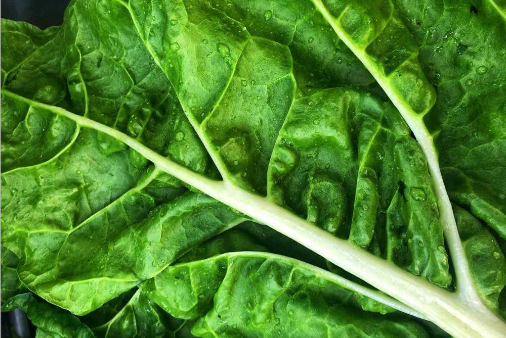 Mit dunkelgrünem Gemüse vegan abnehmen auf Dauer